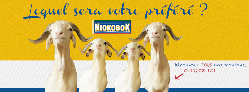 Niokobok, la plateforme qui permet l'achat de moutons en ligne