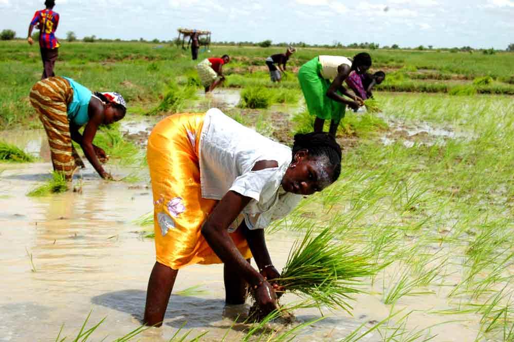 Les paysannes du Mali à l'ère du numérique grâce à l'AGETIC, L'AGEFAU ET ONU FEMMES.
