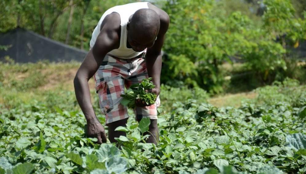 Agritech : Cinq jeunes entrepreneurs sélectionnés pour intégrer l'accélérateur de start-up du Sénégal
