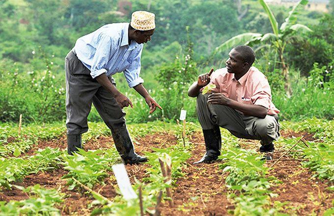 Un nouveau rapport estime que le plus important « dividende numérique » de l'Afrique se trouve dans ses zones rurales