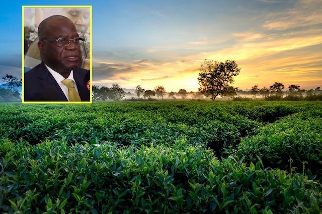 SAIDA, le nouveau projet de la FAO  pour résoudre les problèmes de sécurité alimentaire en Afrique