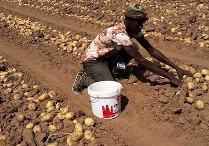 GIZ: appel à candidatures pour start-up agricoles et agroalimentaires en Afrique