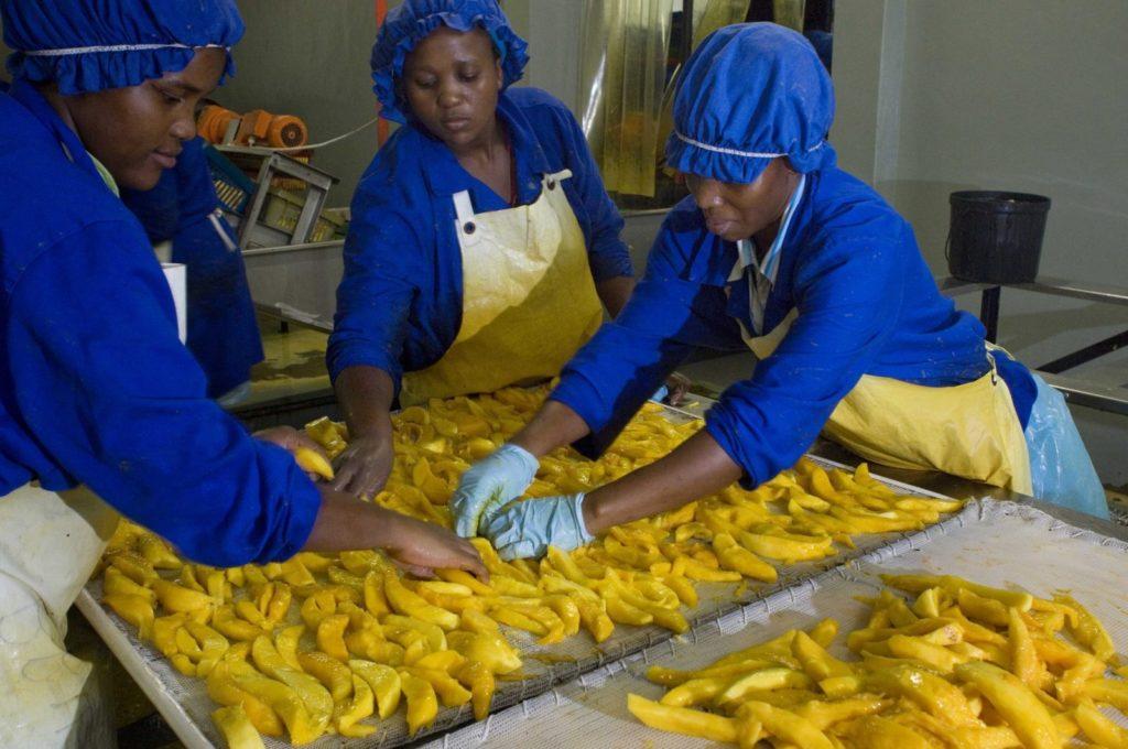 Projet Defi-archipelago: formation de 600 jeunes sur la transformation des produits agroalimentaires