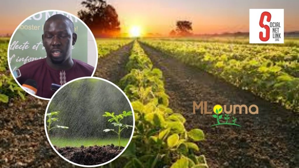 Agritech: Météo Mbay, un outil de collecte et partage de données climatiques pour les producteurs