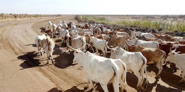 Daral Technologies  : l'élevage connecté